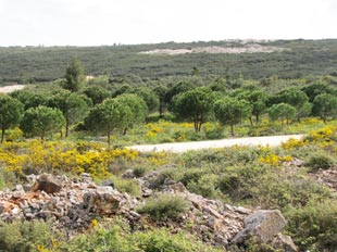 Восстановленный ландшафт на месте старого карьера pull-right img-responsive